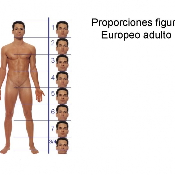 Proporciones figura humana.
