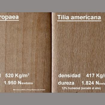 Ficha técnica básica de dos maderas de Tilo