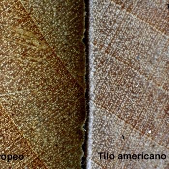 Identificar madera por testa con lupa de bolsillo