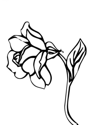 flor02___.jpg
